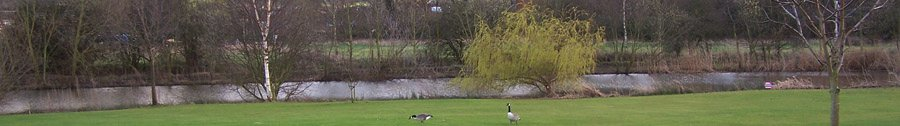 Geese beside the lake at Broadmeadows