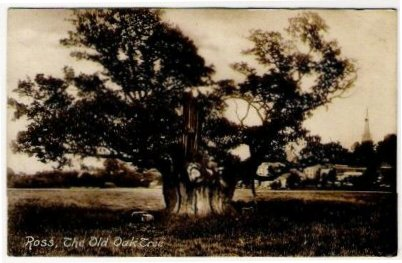Ross, The Old Oak Tree